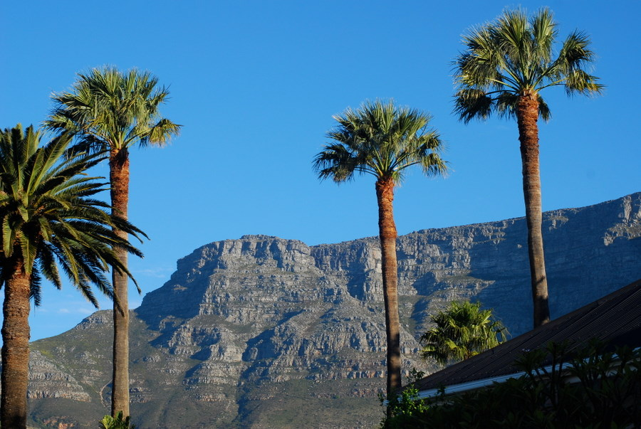 palms and table mountain